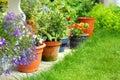 Lobelia flowers and plants Royalty Free Stock Photo