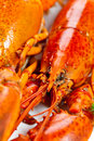 Lobster boiled on dish Stock Photos