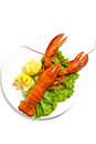 Lobster boiled on dish with lemon slices Royalty Free Stock Image