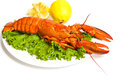 Lobster boiled on dish with lemon slices Stock Image