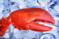 Lobster claw and ice close up Royalty Free Stock Photography
