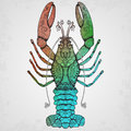 Lobster hand drawn isolated illustration vector Royalty Free Stock Photo