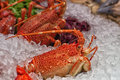 Lobster in the ice Royalty Free Stock Photography