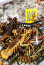 Lobster in new york united of america clawed lobsters comprise a family large marine crustaceans they have long bodies with Stock Photo