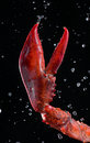 Lobster Pincer