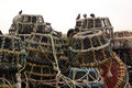 Lobster pots and starlings Royalty Free Stock Images
