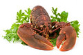 Lobster salad Royalty Free Stock Photo