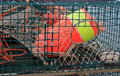 Lobster traps and colorful buoys Royalty Free Stock Images