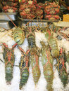 Lobsters in market Royalty Free Stock Photo