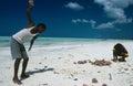 Local boys collecting conches, Zanzibar Stock Photography