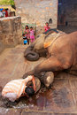Local caretaker cleaning elephant s foot at small elephant quarters in jaipur rajasthan india elephants are used for rides and Stock Photography