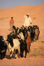 Local man walking with his herd khichan village india rajasthan Stock Photography