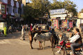 Local people and wild cows on the street of bundi india rajasthan Stock Images
