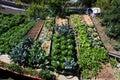 Local vegetable garden Royalty Free Stock Photo