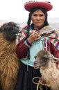 Local woman near cuzco in peru traditional dress with two alpaca at a village south america Royalty Free Stock Photos