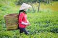 Local women with vietnamese conical hat Royalty Free Stock Images