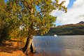 Loch Lomond in October, Scotland Royalty Free Stock Photo