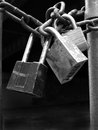 Locks and chain security several on fence gate for Royalty Free Stock Images