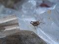 Locust Lost in The Trash
