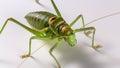 Locust photo taken with lights setup Royalty Free Stock Photos