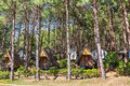 Lodging houses at pang ung for tourists among the pine trees tong reservoir mae hong son province thailand Royalty Free Stock Images