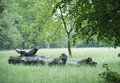 Log bole of a drywood lying on a wet meadow in the park Stock Photo