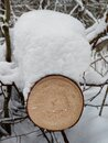 Log covered snow in forest Royalty Free Stock Photo