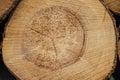 Log lumber timber tree round ring pine spruce tree ring detail close up Stock Images