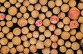 Log lumber timber tree round ring pine spruce tree ring detail trees close up Royalty Free Stock Images