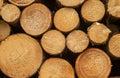Log lumber timber tree round ring pine spruce tree ring detail trees close up Royalty Free Stock Image