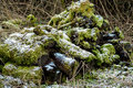 Log pile habitat for invertebrtates and mammals creation on a nature reserve a ideal invertebrates small as well as moss fungi Royalty Free Stock Photography