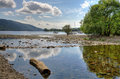 Log on the shore of coniston water in shallow by in english lake district cumbria Royalty Free Stock Images