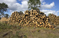 Log stacks large of pine logs on the edge of a clear cut operation Stock Images