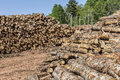 Log stacks of logs in a lumber camp Royalty Free Stock Images
