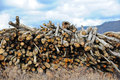 Log stock pile of fresh cut timber at a sawmill Stock Image