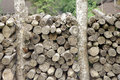 Log wood but and stack in pile elevation photo can be a great background or texture usage Royalty Free Stock Photo
