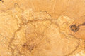 Log of wood texture extreme close up photography Royalty Free Stock Image