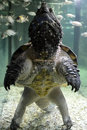 Loggerhead turtle adventure animal swimming Stock Images