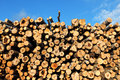 Logging a big pile of tree trunks against the blue sky Royalty Free Stock Images