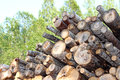 Logging logs in the harvesting of wood Royalty Free Stock Photos