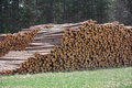 Logging in the midwest a pile of logs that were harvested ready to be transported Royalty Free Stock Photos