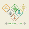 Logo design template agriculture and organic farm.  Abstract line icons elements and badge for food industry. Outline monograms na Royalty Free Stock Photo