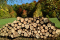 Logs 1 Royalty Free Stock Images