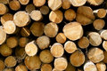 Logs Stock Image
