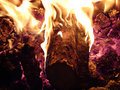 Logs burning in fire Royalty Free Stock Photography