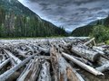 Logs in canada a huge collection of a river Royalty Free Stock Photo