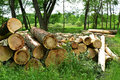 Logs in Forest Royalty Free Stock Photo