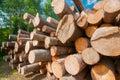Logs at lumber mill Royalty Free Stock Photo