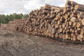Logs at lumber mill Royalty Free Stock Photo