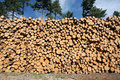 Logs in a Pile Royalty Free Stock Image
